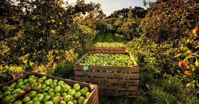 Celebrate the history of Ireland's Orchard County