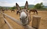 donkey-cheese-3
