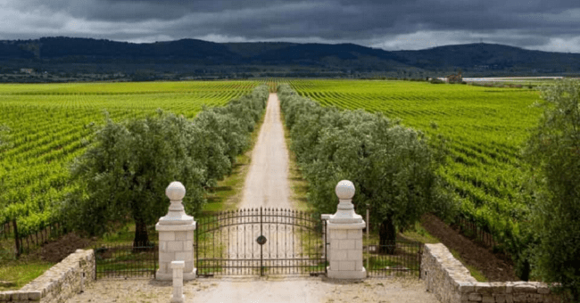 Puglia Wines Change is afoot in Italy Get a kick out of Puglia's rich reds