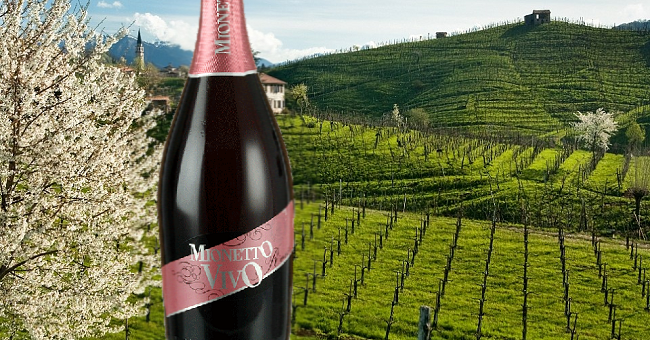 Mionetto Vivo Rose Prosecco – Wine of the Week from O'Briens