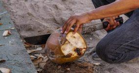 Fresh coconut Playa Larga