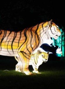 dublin wild nights zoo