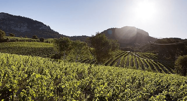 France's Rhône Valley - The Place to Go for White Wines for the Winter