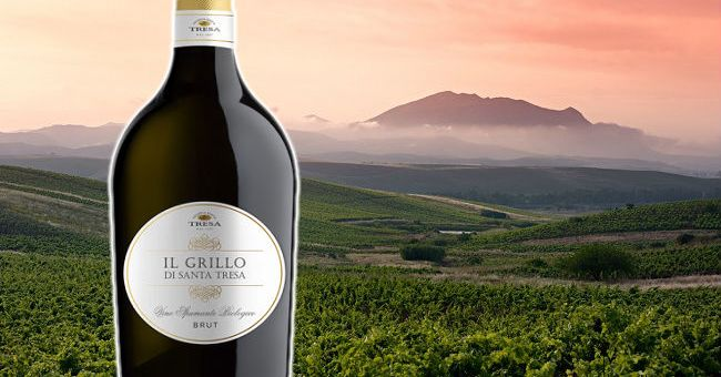 Il Grillo di Santa Tresa Spumante - Wine of the Week from O'Briens Wine