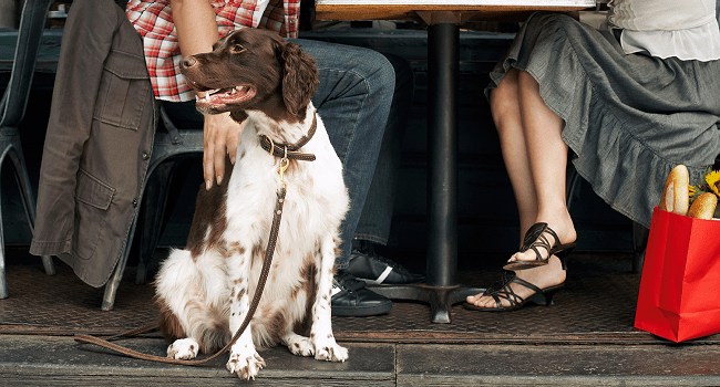 Pets Allowed in Restaurants in Ireland, as FSAI Repeals Ban