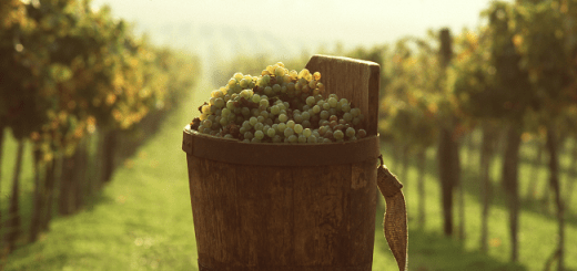 Expanding the Vinous Map Exciting Wines from Eastern Europe and the Middle East