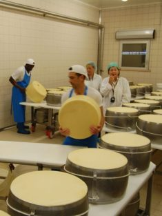 Parmesan cheese factory4