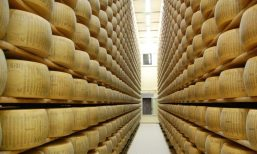 Parmesan cheese factory6