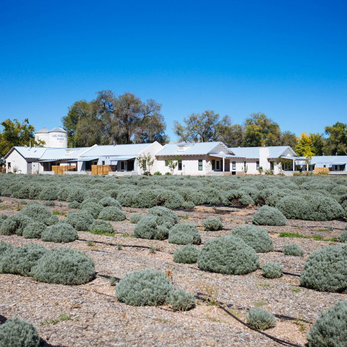 You'll want to Wander through the lavender fields at Los Poblanos Historic Inn and Lavender Farm Albuquerque, The Taste SF