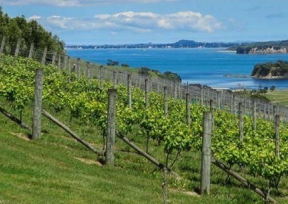 waiheke island wine region