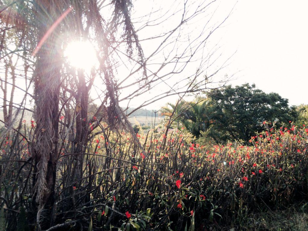 Brazil flora