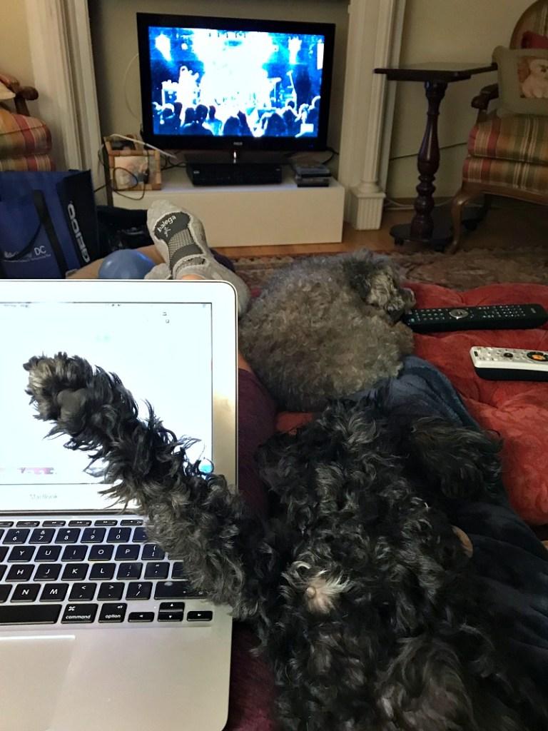 TrustedHousesitters dog sitting