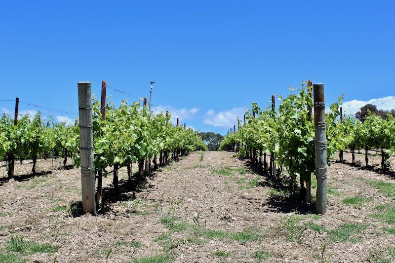 Beckman Vineyards