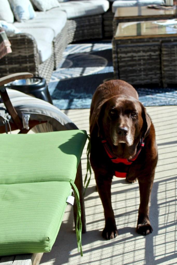dog sitting in San Pedro
