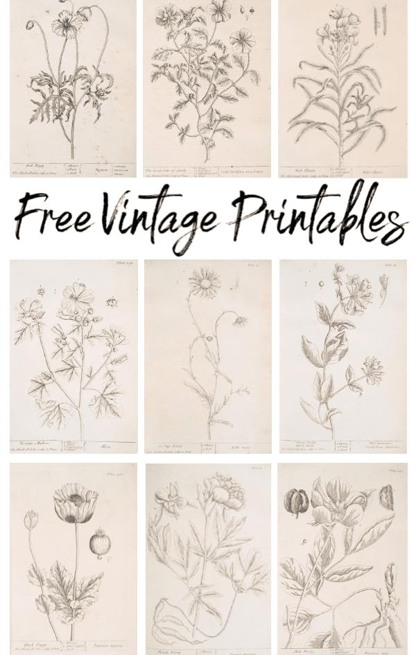 Botanical Vintage Printables - Welcome Home Sunday