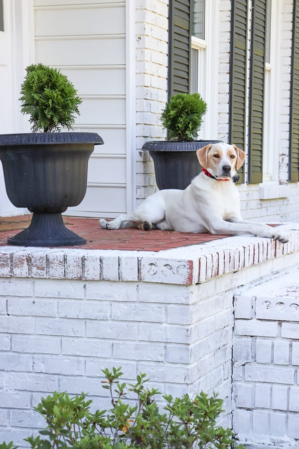 Limewashing your house for instant curb appeal.