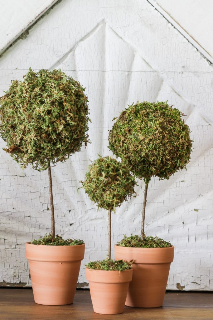 Mini moss ball topiary DIY.