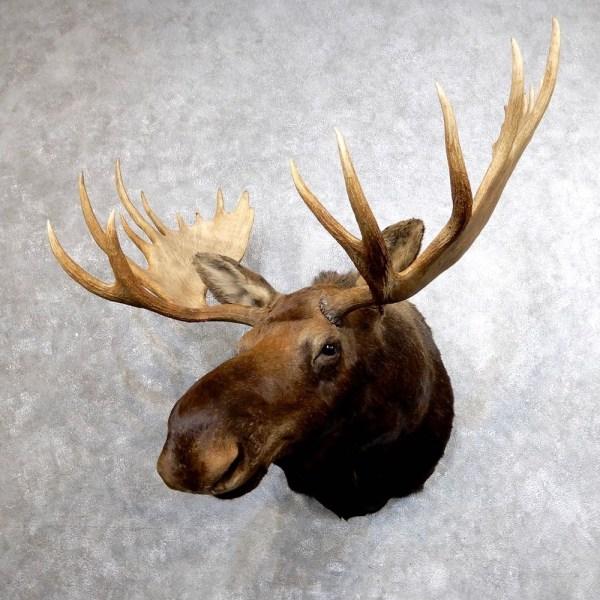 Elk Antlers For Sale Craigslist - Year of Clean Water