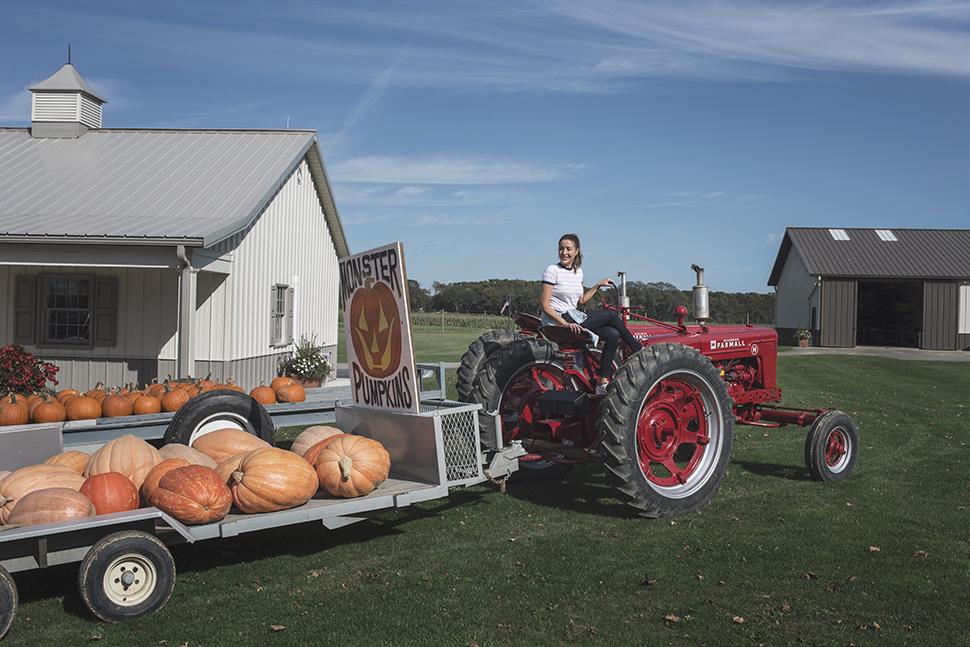 Halsey Farm pumpkin patch