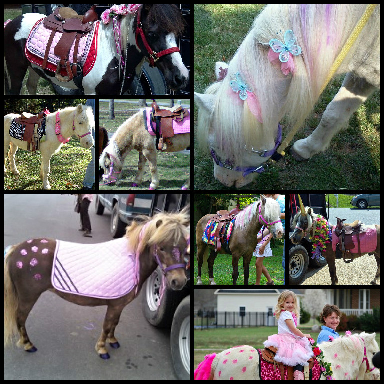 Pony Rides for Pony Birthday Parties in Virginia  The