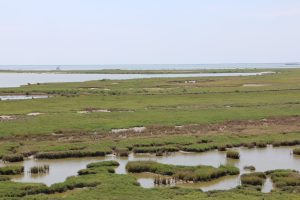 Here are the 21 Texas National Wildlife Refuges
