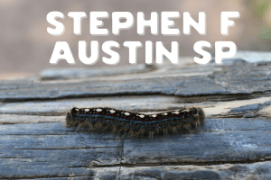 What to Expect at Stephen F Austin State Park