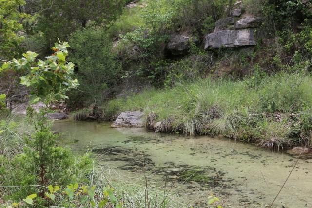 image of cow creek at Balcones wildlife refuge near Austin, tx
