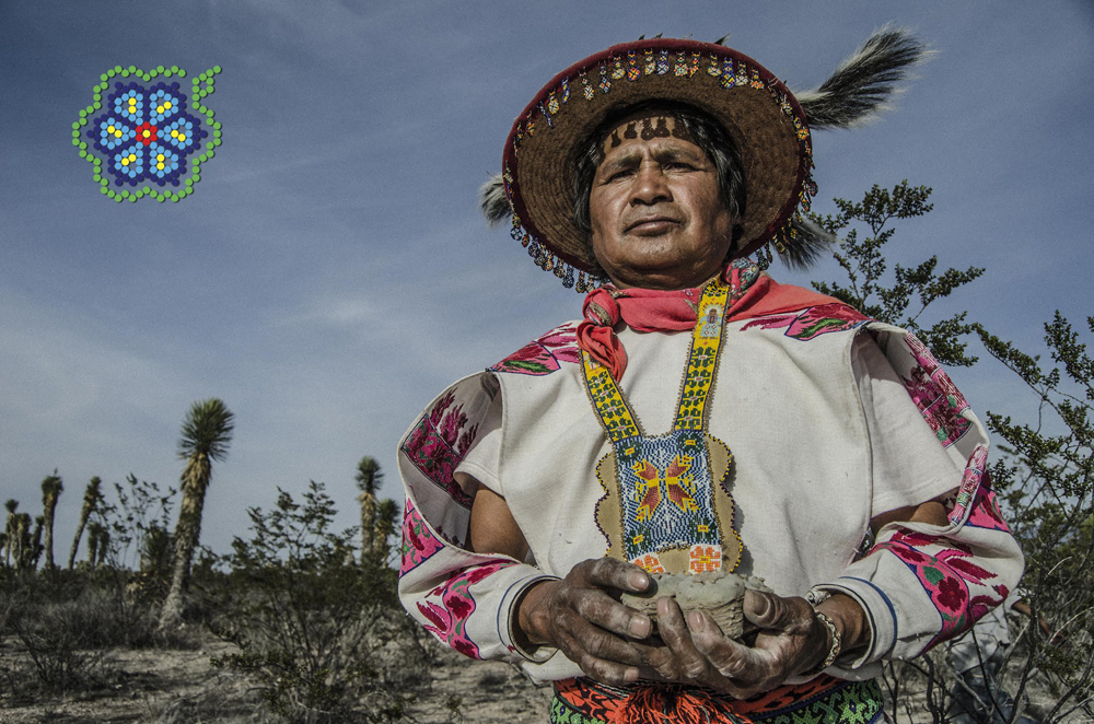 Mara'akame Don José Luis Ramirez (Urramuire) with the first hunted peyote at Wirikuta, San Luis Potosí, Mexico. The spiritual leaders or Huichol shamans are known as 'Mara'akame', which means the one who knows how to dream.