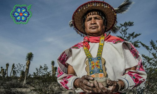 SAVING MAGIC IN MEXICO With The Last Peyote Guardians