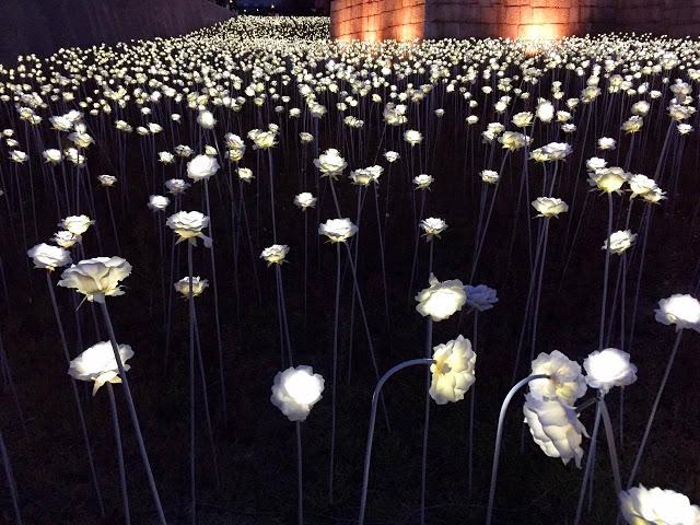 DDP LED Rose Garden