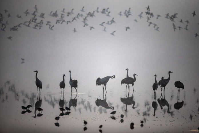 Αποδημητικά πουλιά σε λίμνη του Βόρειου Ισραήλ