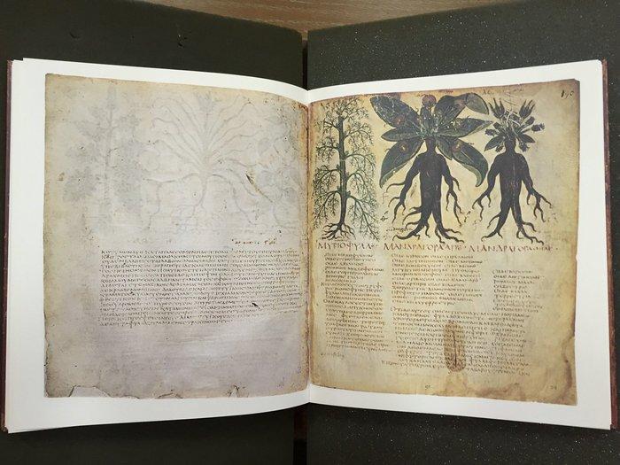 Tο φυτό μανδραγόρας από τον κώδικα του Διοσκουρίδη Περί Ύλης Ιατρικής της Εθνικής Βιβλιοθήκης της Νάπολης