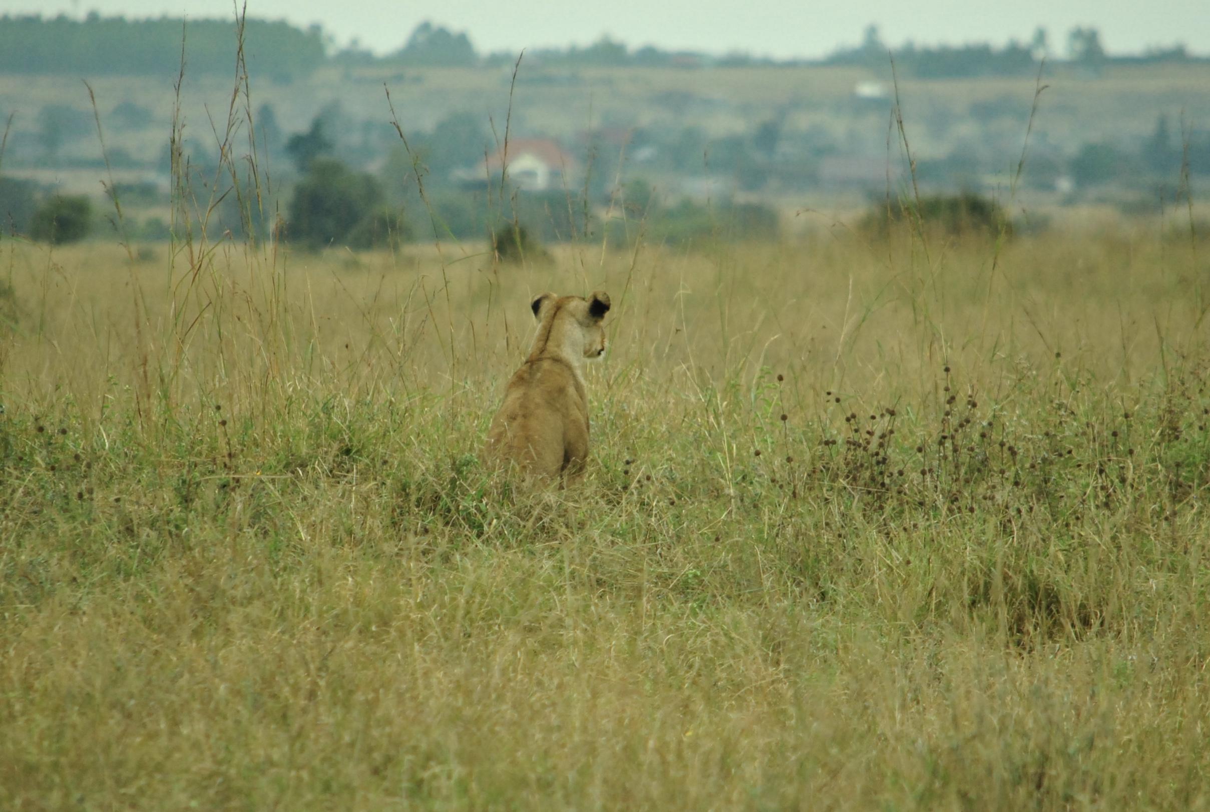 A single source of truth - Can the Huduma Namba succeed as