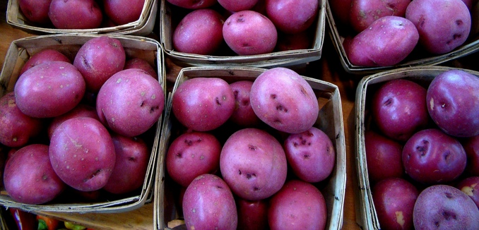 FeaturedImage_2017-08-24_Flickr_Purple_Potatoes_5087912635_3f0480714e_b