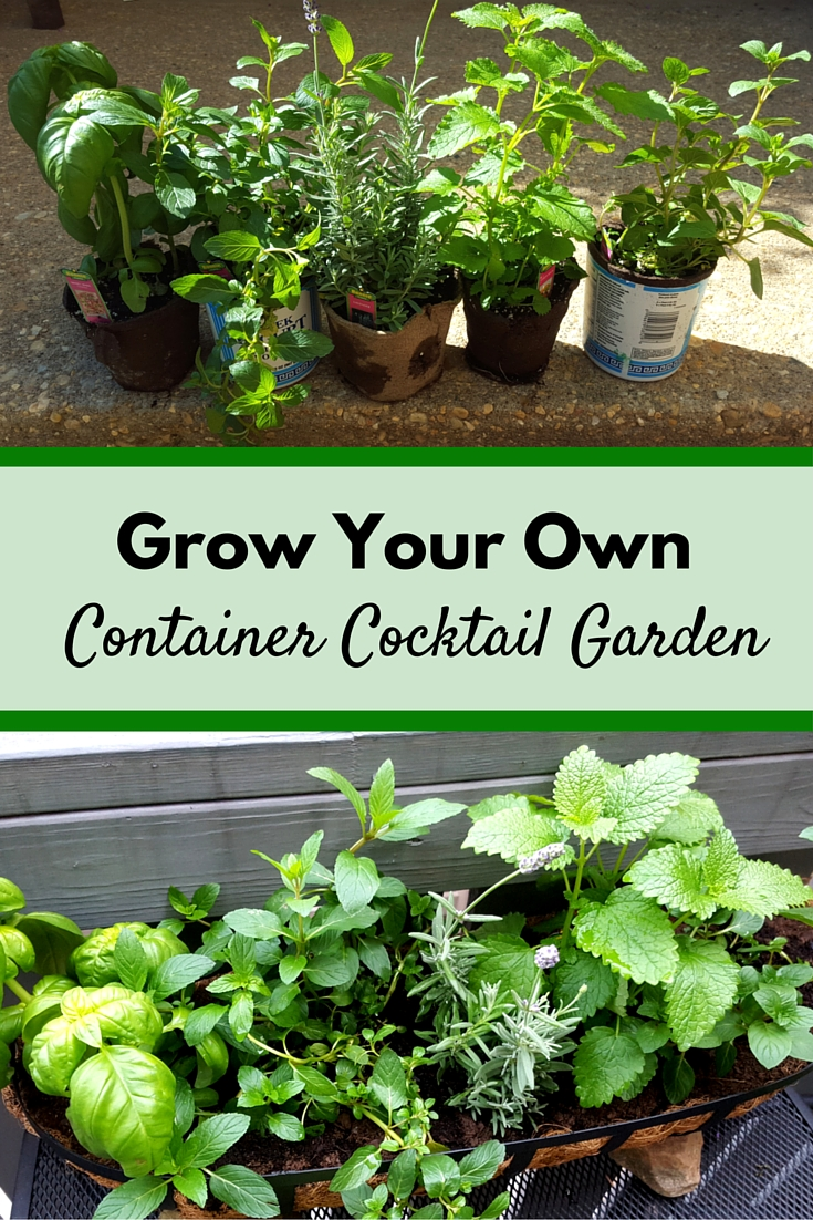 Container Cocktail Garden