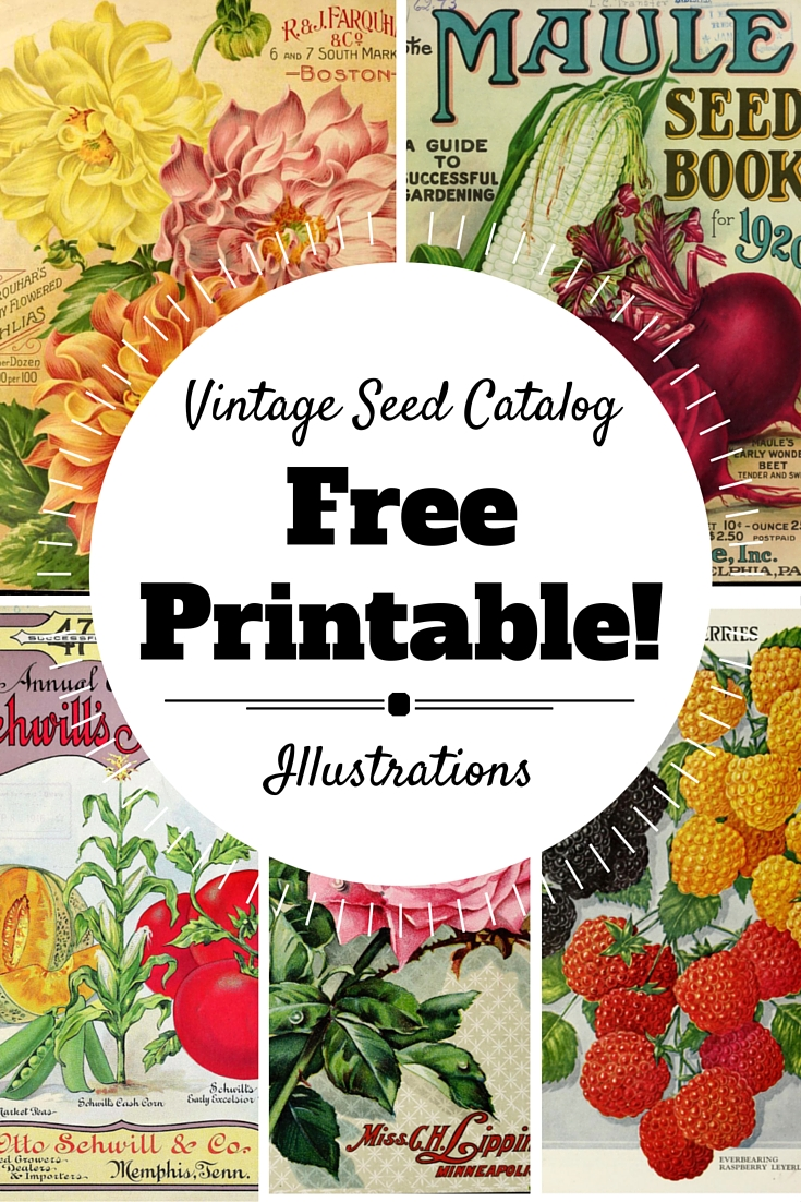 Free Printable: Vintage Seed Illustrations