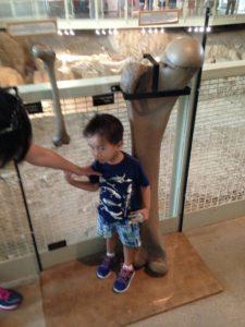 Tyler measuring up to a leg bone at Waco Mammoth