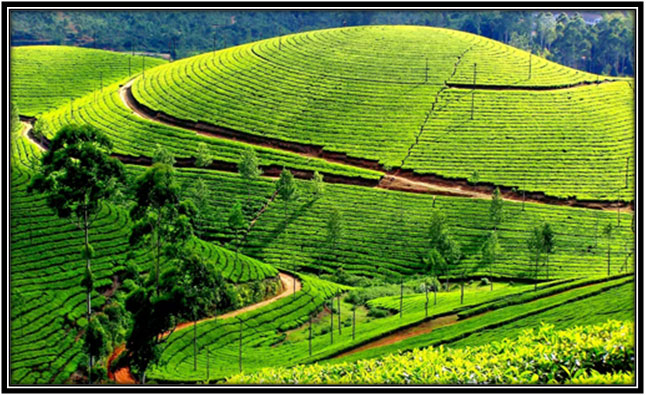Kerala - the land of gods