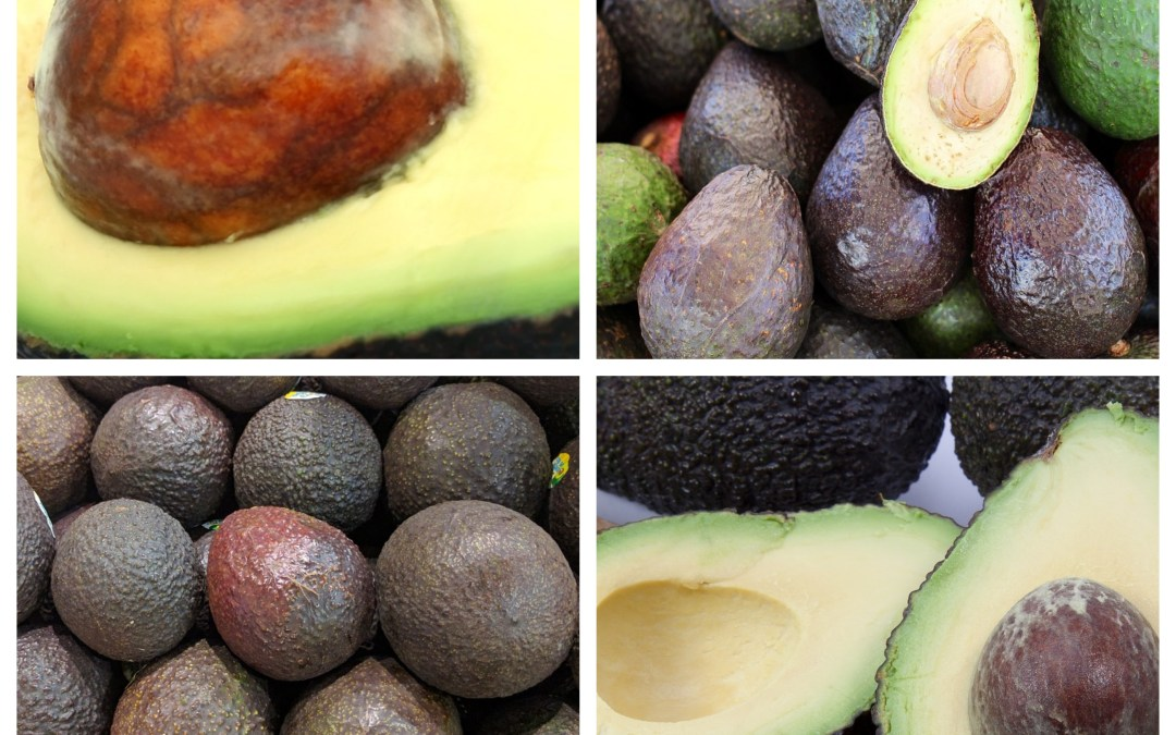 The Avocado – An accident of evolution
