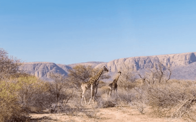 "Featured Travel Video Of The Week: Tyler Fairbank ""SAFARI 