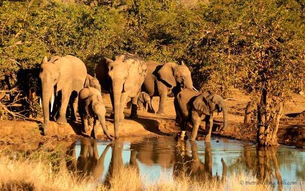 Punda Maria waterhole elephant kruger south africa