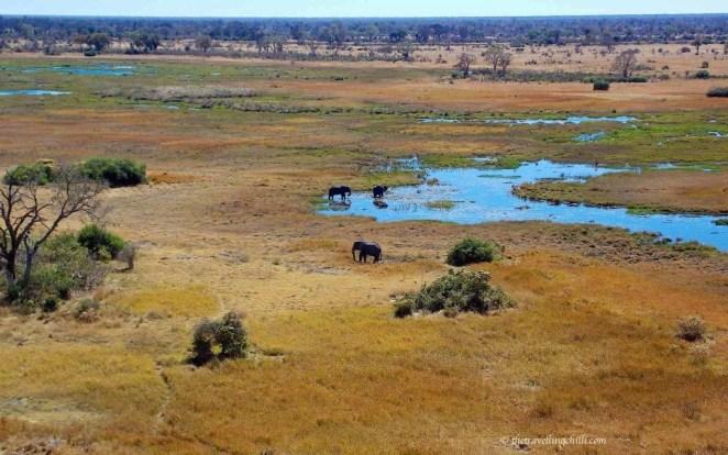 elephant mammal botswana delta