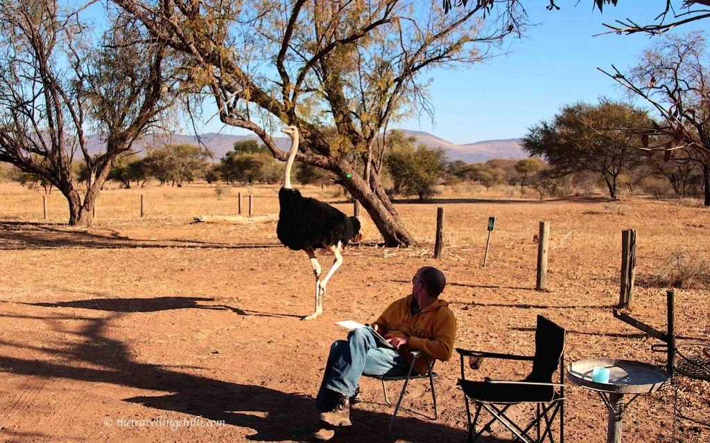 ostrich marakele bontle campsite sanparks south africa