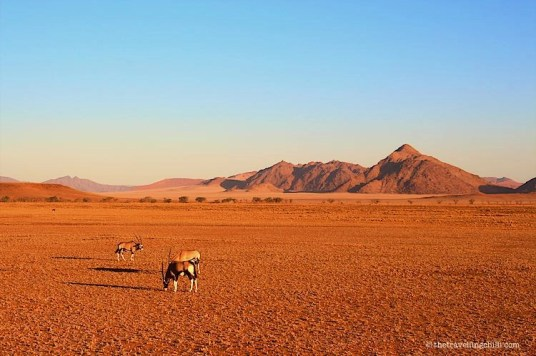 Sossusvlei Namibia Oryx Gemsbok