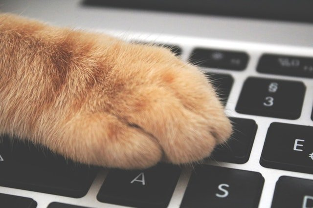 Cats paw typing on an Apple computer