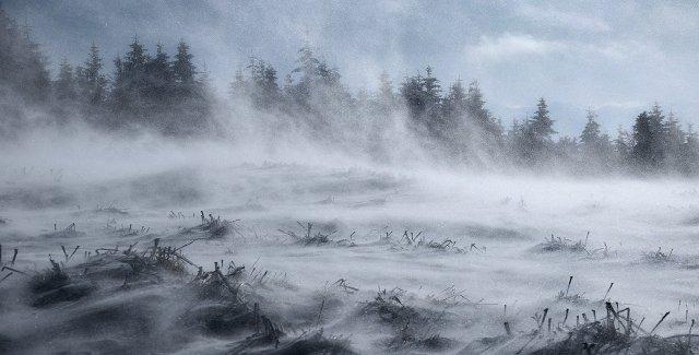 Windy winter landscape