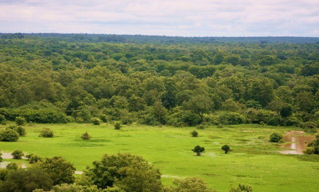 Things to do in Ghana - visit Mole National Park