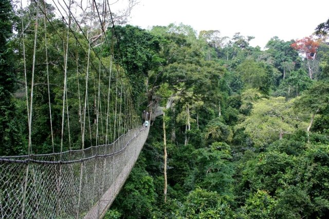 Things to do in Ghana - visit Kakum National Park and walk the canopy