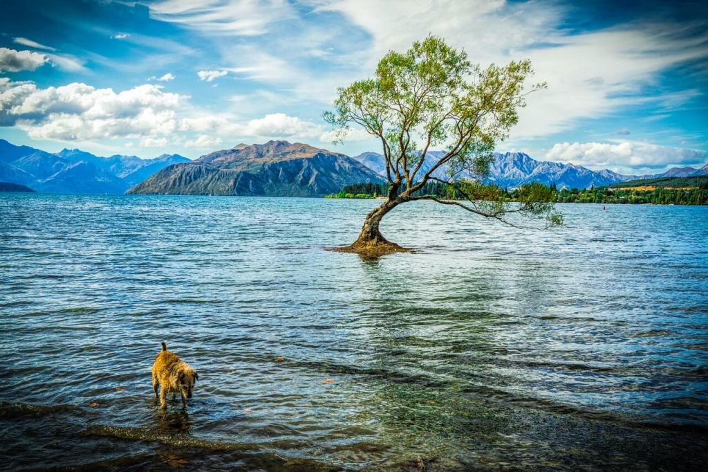 Tree in the water at Lake Wanaka