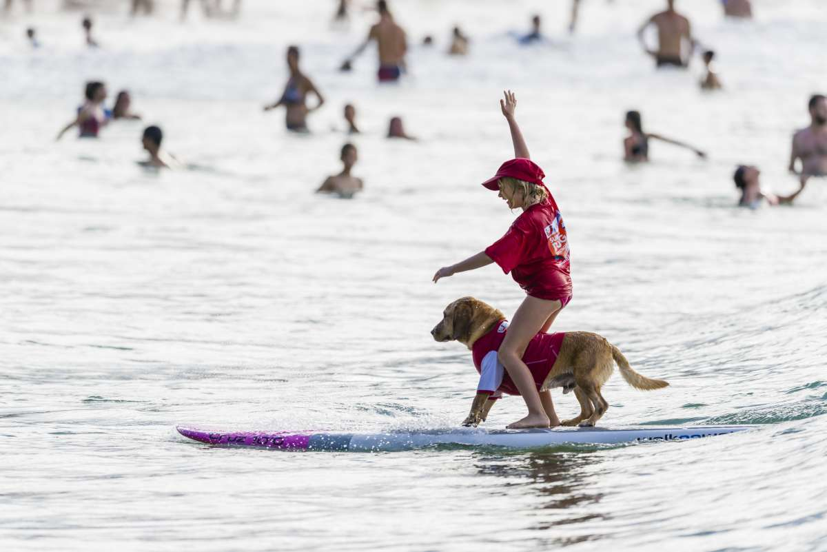 Noosa Festival of Surfing - sufer boy with dog  Noosa Pageant of Browsing – surf together with your canine Noosa Festival of Surfing sufer boy with dog